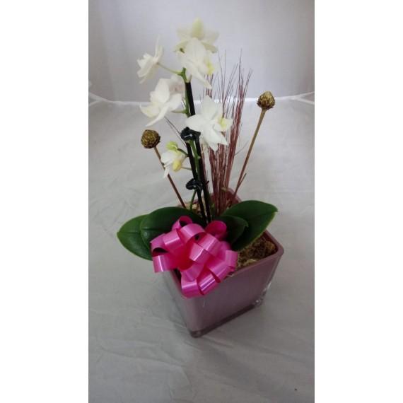 Orquídea 2 Hastes