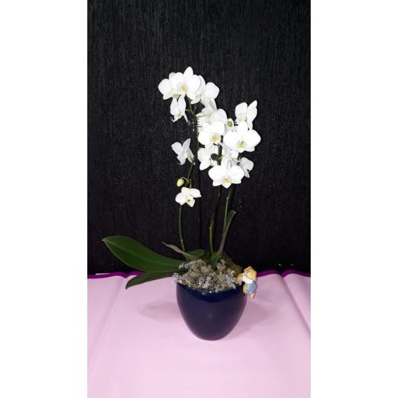 Orquídea 3 Hastes Multiflora