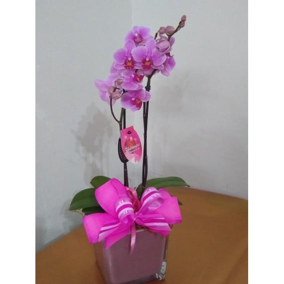 Linda Orquídea phalaenopsis em vaso de vidro tom rosa envelhecido  importado